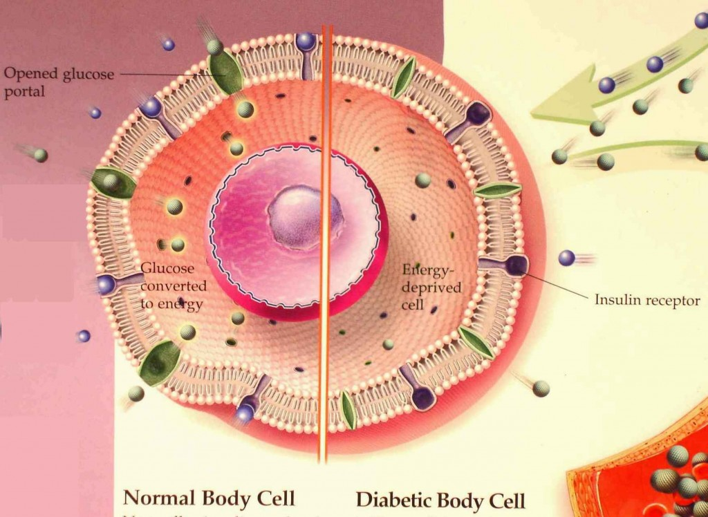 The Human Cell Lifestyle Rejuvenate